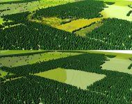 springendal;jonge ontginningsakkers;natuurgebied;landschapsontwikkeling;staatsbosbeheer; landschapsvisie