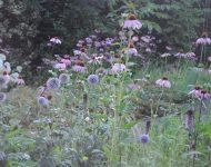 Garten familie Stortelder
