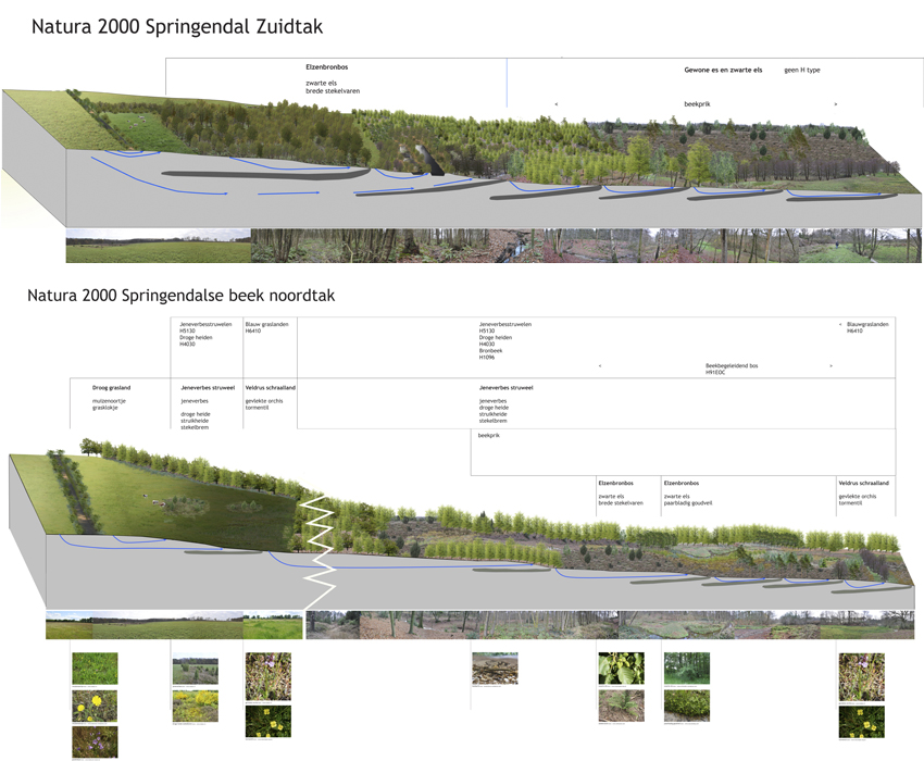 Natura 2000 Springendal