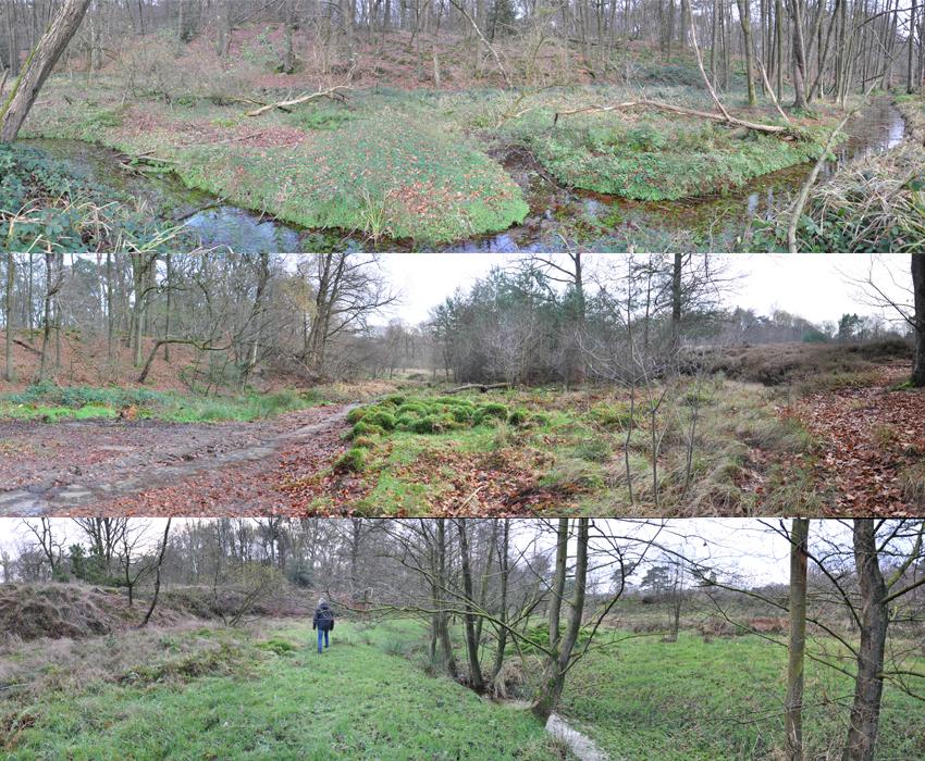 Natura 2000 areas