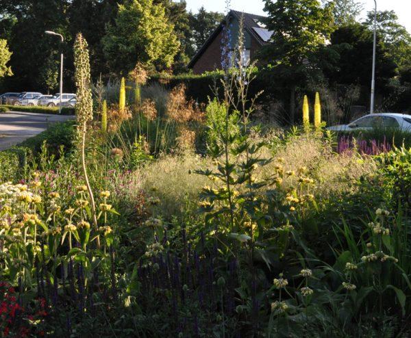 natuurlijke tuin, natural garden,natürliche garten, beplantingsplan, Eremurus stenophyllus, Stipa gigantea,Phlomis russeliana en Deschampsia cespitosa